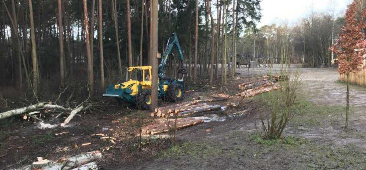 Baumfällarbeiten im Standort Sandkrug