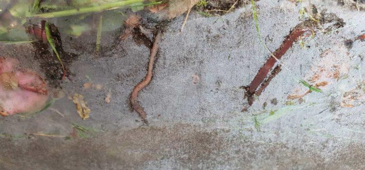 1. Jahrgang wird zu Regenwurm-Forschern